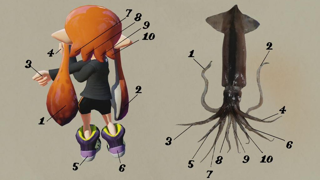 Latest Splatoon Update Details The Transformation Of Squid
